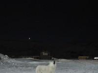 Собака и звезда в Териберке