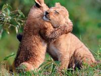 День телесности - праздник розен-обнимашек