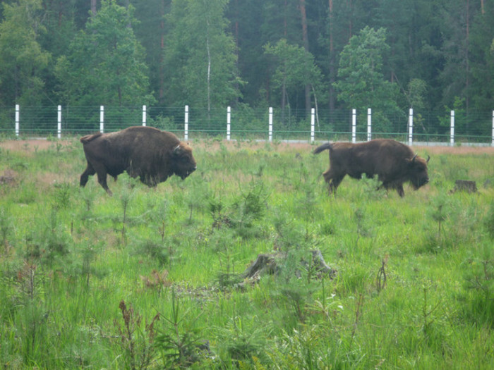 Встреча с животным силы - мастер-класс 22 июня 2017 года